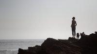 Voyager avec son chien : départ en road-trip avec nos chiens-loups de saarloos direction le Portugal et les plages de l'océan atlantique