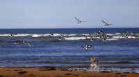 Voyager avec son chien : Alanis, chien-loup de saarloos, road-trip en Ecosse