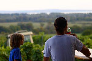Vignoble en Hongrie durant notre road-trip en famille avec les enfants autour de l'Europe (en unschooling ou non-sco)