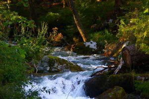 Le torrent de la forêt magique dans les Hautes Tatras, Slovaquie, durant notre road-trip