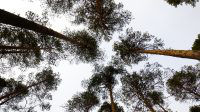 Forêt Finlande, road-trip