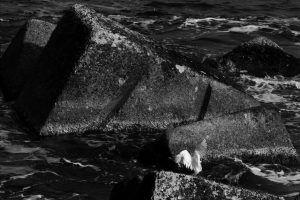Aigrette blanche à Syracuse, road-trip autour de l'Europe