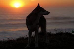 voyage avec les chiens-loups et les enfants autour de l'europe sauvage et mythologique