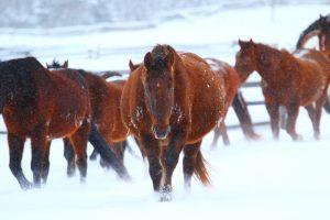 Denver, jument du Teepee Heart Ranch