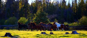 chevaux du teepee heart ranch