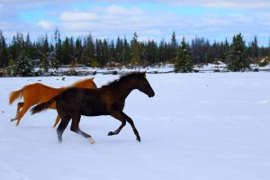 Open Your Heart, stallion aqha/apha by Lazy Loper