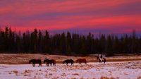 débourrage naturel au troupeau, pieds nus et sans mors